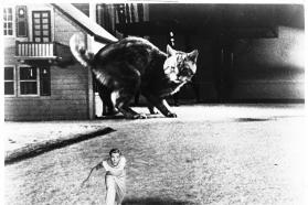 """""""Neįtikėtinai susitraukęs žmogus"""", rež. Jack Arnold, 1957"""